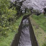 近所の桜撮影(17/4/10)