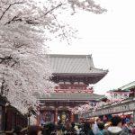 都内の桜巡り(18/3/27)